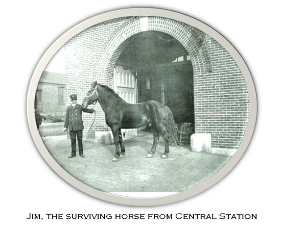 Jim, the surviving horse from central station in the 1895 fire disaster, Butte, Montana
